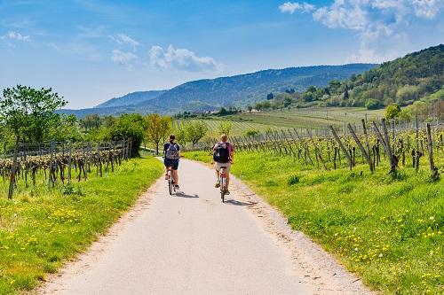 Tours de vin en Toscane